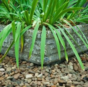 20mm gravel round plant