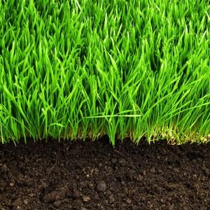turf soil 2