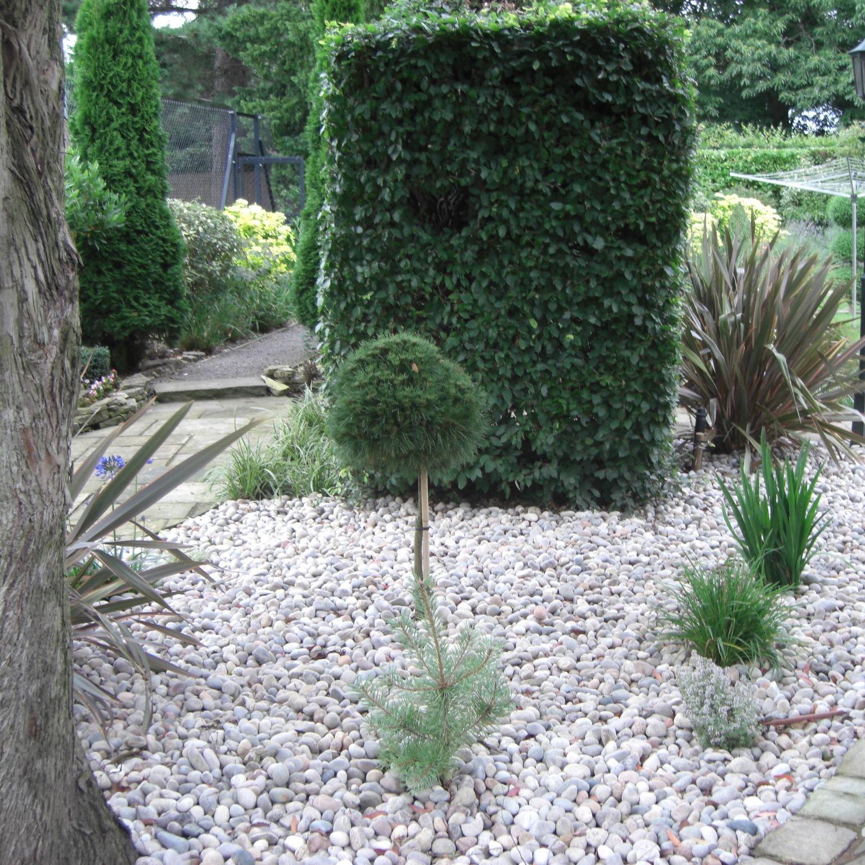 Backyard Pebbles: Scottish Pebbles And Cobbles