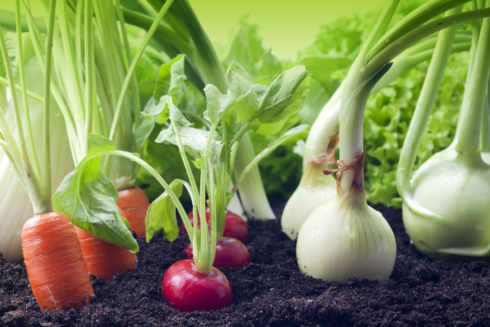 Premier Vegetable Topsoil
